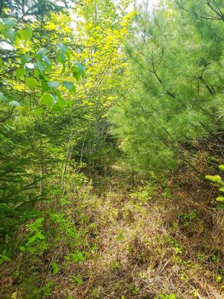 Photo 7: Lot 101 Dorey Mills Road in Clearland: 405-Lunenburg County Vacant Land for sale (South Shore)  : MLS®# 202119645