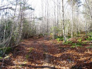 Photo 3: Lot Highway 107 in West Petpeswick: 35-Halifax County East Vacant Land for sale (Halifax-Dartmouth)  : MLS®# 202114068