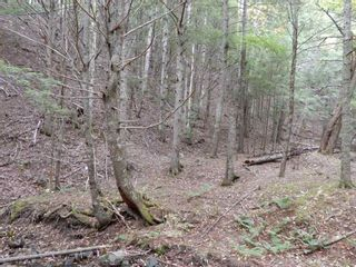Photo 11: Tanner Hill Road in Limerock: 108-Rural Pictou County Vacant Land for sale (Northern Region)  : MLS®# 202020165