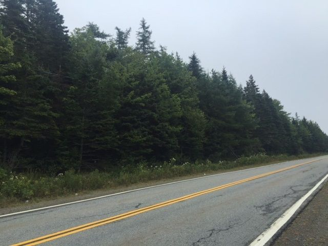 Photo 3: Photos: NO Highway 7 in Sheet Harbour: 35-Halifax County East Vacant Land for sale (Halifax-Dartmouth)  : MLS®# 202009247
