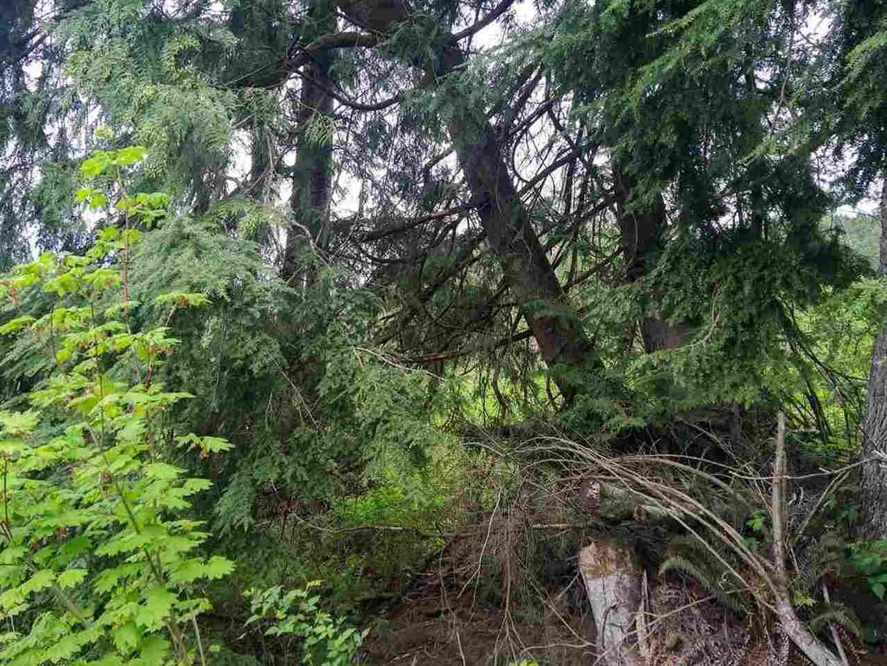 """Photo 9: Photos: #LT.2 37885 BAKSTAD Road in Abbotsford: Sumas Mountain Land for sale in """"Rock Cliff Park"""" : MLS®# R2118217"""