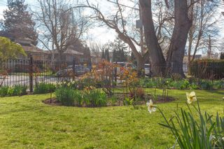 Photo 30: 216 Linden Ave in : Vi Fairfield West House for sale (Victoria)  : MLS®# 872517
