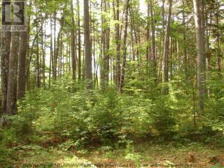 Photo 10: Lot 11 RAFUSE POINT Road in Pleasantville: Vacant Land for sale : MLS®# 202122075