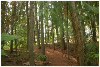 Photo 10: Lot 49 Forest Drive: Blind Bay Vacant Land for sale (Shuswap Lake)  : MLS®# 10217653
