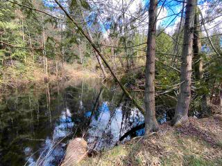 Photo 3: 1815 HARMAN Road: Roberts Creek Land for sale (Sunshine Coast)  : MLS®# R2614266