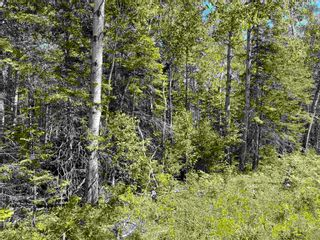 Photo 3: Lot 21-2 Alma Road in Loch Broom: 108-Rural Pictou County Vacant Land for sale (Northern Region)  : MLS®# 202120252
