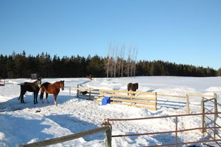 Photo 27: 370 ROSS CREEK Road in Ross Creek: 404-Kings County Farm for sale (Annapolis Valley)  : MLS®# 202102366