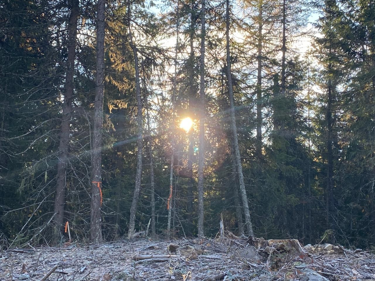Main Photo: Lot 6 RED MOUNTAIN ROAD in Rossland: Vacant Land for sale : MLS®# 2455884