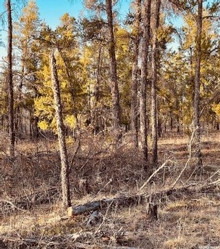 Photo 4: Over one acre lots in Hudson Bay: Lot/Land for sale : MLS®# SK850478