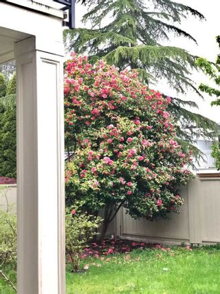 Photo 15: 6071 NANIKA Crescent in Richmond: Granville House for sale : MLS®# R2549158