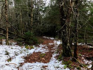Photo 11: LOT 100ABC WEST PETPESWICK Road in West Petpeswick: 35-Halifax County East Vacant Land for sale (Halifax-Dartmouth)  : MLS®# 5158270