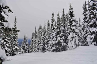 """Photo 12: 217 PRAIRIE Road in Smithers: Smithers - Rural Land for sale in """"Hudson Bay Mountain Resort"""" (Smithers And Area (Zone 54))  : MLS®# R2545464"""