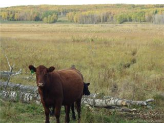 Photo 5: on Range Road 42: Rural Ponoka County Agriculture for sale : MLS®# A1102356