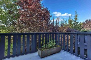"""Photo 14: 156 20875 80 Avenue in Langley: Willoughby Heights Townhouse for sale in """"Pepperwood"""" : MLS®# R2493319"""