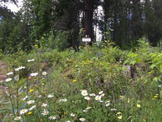 Photo 11: 1969 SANDY ROAD in Castlegar: Vacant Land for sale : MLS®# 2461033