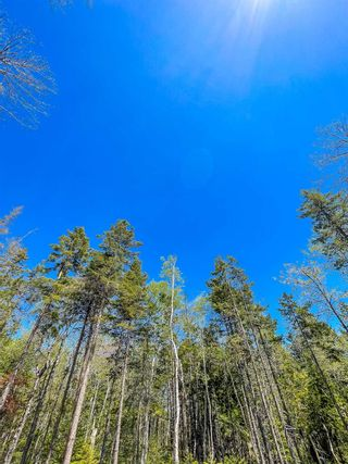 Photo 6: Lot 24 Loon Lane in Aylesford Lake: 404-Kings County Vacant Land for sale (Annapolis Valley)  : MLS®# 202117530