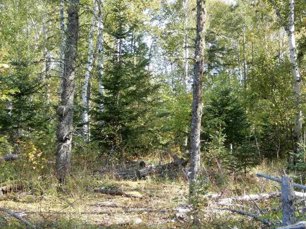 Main Photo: Tanner Hill Road in Limerock: 108-Rural Pictou County Vacant Land for sale (Northern Region)  : MLS®# 202121301