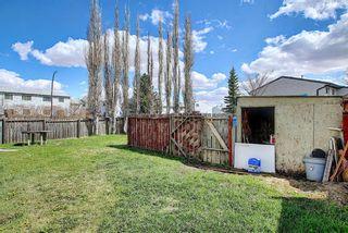Photo 42: 455 Falconridge Crescent NE in Calgary: Falconridge Detached for sale : MLS®# A1103477