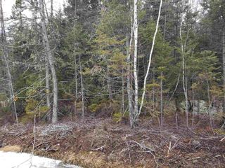 Photo 9: Lots Melrose Country Harbour Road in Country Harbour: 303-Guysborough County Vacant Land for sale (Highland Region)  : MLS®# 202102147