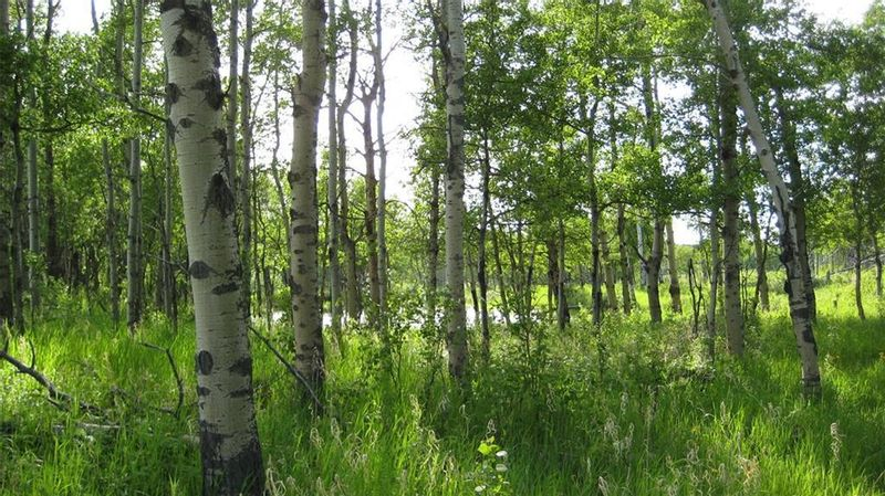 FEATURED LISTING: TWP RD 272 & RR 41 Rural Rocky View County