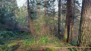 Photo 8: 304 Eagle Ridge Dr in : GI Salt Spring Land for sale (Gulf Islands)  : MLS®# 863149