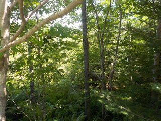Photo 10: Lot M-1 127 Charleswood Drive in Windsor Junction: 30-Waverley, Fall River, Oakfield Vacant Land for sale (Halifax-Dartmouth)  : MLS®# 202121061