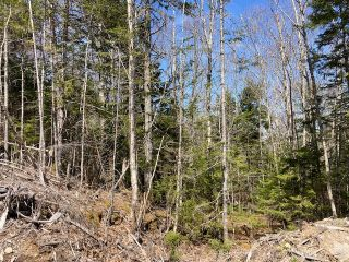 Photo 6: 65 Eaglet Lane in Musquodoboit Harbour: 35-Halifax County East Vacant Land for sale (Halifax-Dartmouth)  : MLS®# 202109854