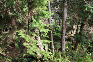 Photo 18: 5852 MARINE Way in Sechelt: Sechelt District Land for sale (Sunshine Coast)  : MLS®# R2545877