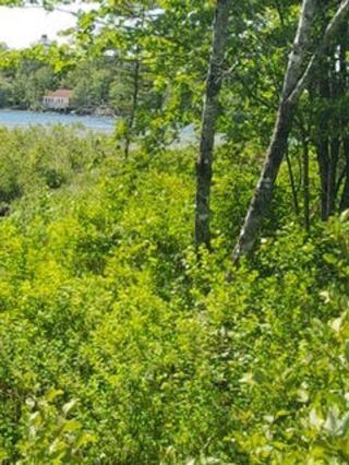 Photo 16: Lot F Clam Bay Road in Lake Charlotte: 31-Lawrencetown, Lake Echo, Porters Lake Vacant Land for sale (Halifax-Dartmouth)  : MLS®# 202108698