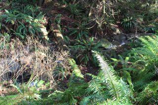 Photo 5: 5852 MARINE Way in Sechelt: Sechelt District Land for sale (Sunshine Coast)  : MLS®# R2545877