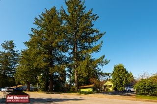 Photo 17: 12381 227 Street in Maple Ridge: North Maple Ridge House for sale : MLS®# R2569612