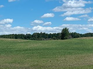 Photo 5: TWP 475 RR 31: Rural Leduc County Rural Land/Vacant Lot for sale : MLS®# E4244953