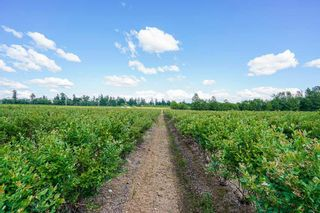 Photo 13: 21.44AC 240 STREET in Langley: Langley City Agri-Business for sale : MLS®# C8038637
