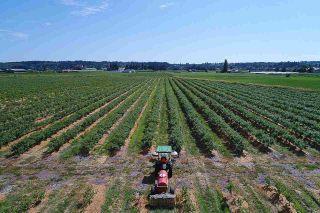 Photo 29: 16397 40 Avenue in Surrey: Serpentine Land for sale (Cloverdale)  : MLS®# R2586709