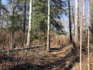 Photo 4: 65-460002 Hwy 771: Rural Wetaskiwin County Rural Land/Vacant Lot for sale : MLS®# E4149706