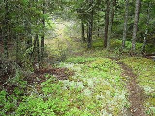 Photo 11: 0 Moshers Island Road in LaHave River: 405-Lunenburg County Vacant Land for sale (South Shore)  : MLS®# 202111805