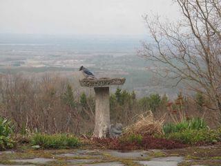 Photo 37: 798475 3rd Line in Mulmur: Rural Mulmur House (Bungalow) for sale : MLS®# X4806669