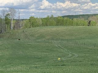 Photo 9: 53000 Range Road 73: Rural Parkland County Rural Land/Vacant Lot for sale : MLS®# E4202767