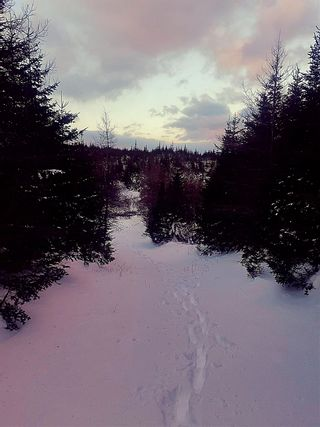 Photo 2: 0 Louisbourg Highway in Louisbourg: 207-C. B. County Vacant Land for sale (Cape Breton)  : MLS®# 202102405