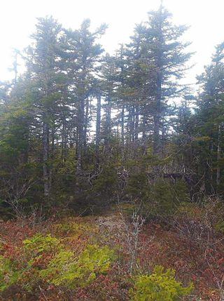 Photo 4: 0 Louisbourg Highway in Louisbourg: 207-C. B. County Vacant Land for sale (Cape Breton)  : MLS®# 202102405