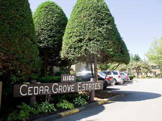 Photo 1: 39 11160 KINGSGROVE AVENUE in Cedar Grove Estates: Ironwood Townhouse for sale ()  : MLS®# R2004028