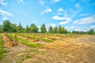 Photo 13: 3155 BRADNER Road in Abbotsford: Aberdeen Agri-Business for sale : MLS®# C8039365