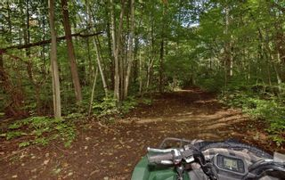 Photo 31: 19375 Mississaugas Trail Road in Scugog: Port Perry House (Sidesplit 4) for sale : MLS®# E5386585