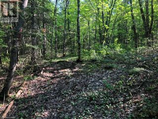 Photo 24: N/A RANEY Road E in Sundridge: Vacant Land for sale : MLS®# 40129602