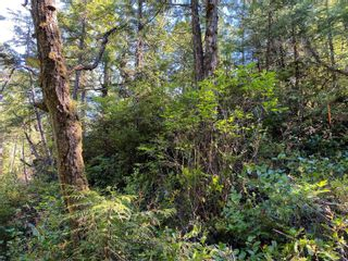 Photo 7: 851 Lorne White Pl in : PA Ucluelet Land for sale (Port Alberni)  : MLS®# 878308