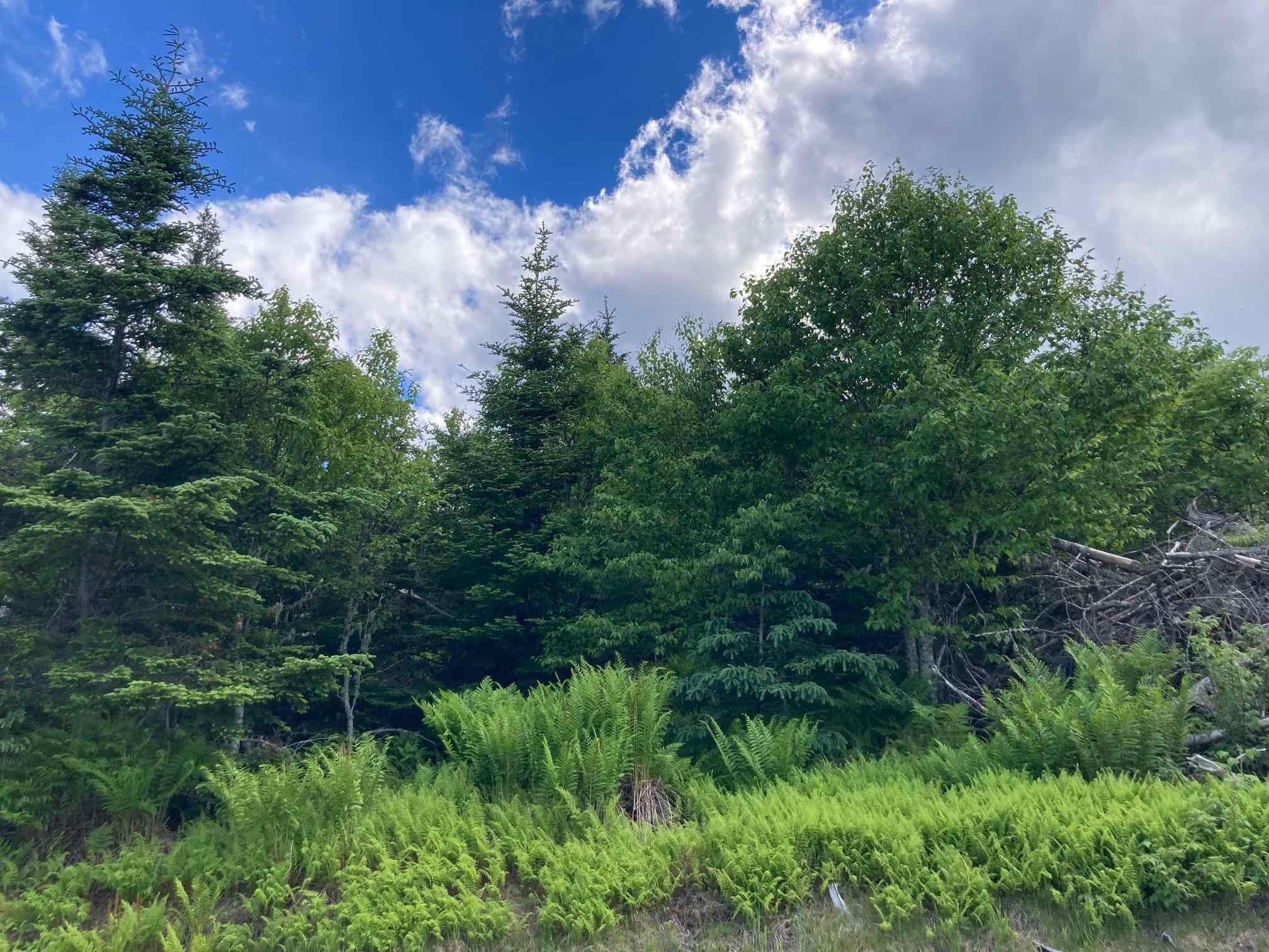 Main Photo: Lot 102 Point Road in Clam Bay: 35-Halifax County East Vacant Land for sale (Halifax-Dartmouth)  : MLS®# 202116103
