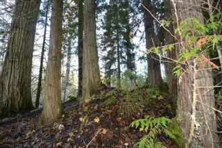"""Photo 20: 161 HELEN LAKE Road: Hazelton Land for sale in """"KISPIOX VALLEY"""" (Smithers And Area (Zone 54))  : MLS®# R2355392"""