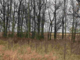 Photo 8: Twp Rd 583 Rge Rd 271: Rural Westlock County Rural Land/Vacant Lot for sale : MLS®# E4218422