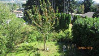 Photo 9: 5602 MEDUSA PLACE in Sechelt: Sechelt District House for sale (Sunshine Coast)  : MLS®# R2492143