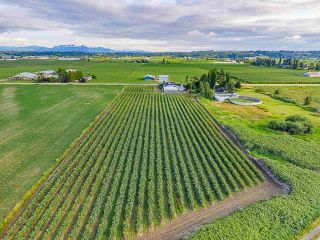 Photo 7: 32263 Harris Road in Abbotsford: House for sale : MLS®# R2385141